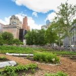 Cultivating Urban Agriculture in the USA