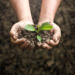 Sustainability in Nutrition? A holistic concept for science and seven principles for education