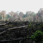 Is REDD+ Dead? Why there is still potential for business to save forests