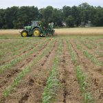Want Better Weed Control in Organic No-Till Crops? Research Shows Mulch is Not Enough!