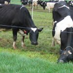 Towards an improved estimation of animal feed efficiency