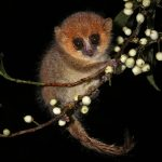Forest edges have genetic consequences: a further threat for lemurs in Madagascar?