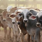 Livestock production evolving to contribute to sustainable societies