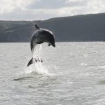 Marine protected areas and marine spatial planning for the benefit of marine mammals