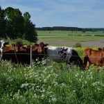Improving dairy herd health management programs