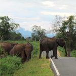 First country-wide distribution survey of the Endangered Asian elephant: towards better elephant conservation and management in Sri Lanka