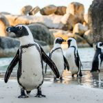 Parasite diversity associated with African penguins (Spheniscus demersus) and the effect of host and environmental factors