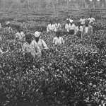Labour History and the Case against Colonialism