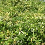 A perfect storm: are environmental factors fuelling herbicide resistance?