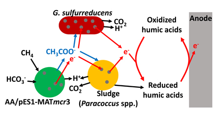 microbial-fuel-cell