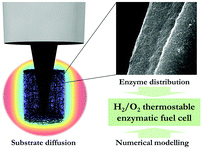 enzymatic fuel cell